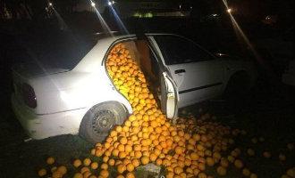 Politie houdt dieven aan met 4.000 sinaasappels in de auto voor eigen gebruik