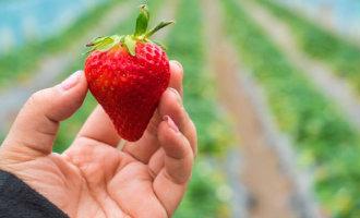 Nederland verkoopt tegenwoordig meer groente en fruit dan het zonnige Spanje