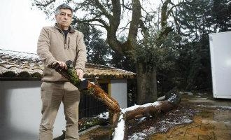 Man krijgt 100.000 euro boete voor het omzagen van een boom nabij Madrid