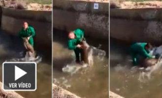 De Guardia Civil start onderzoek naar mishandelaar van een wild zwijn *UPDATE*