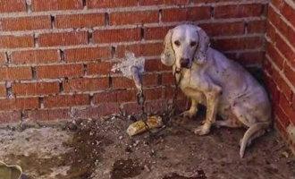 Celstraf en hoge boete voor jager die 55 honden mishandelde