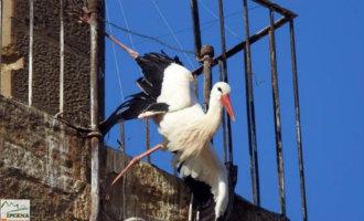 Het bisdom van Lleida moet gevaarlijke anti ooievaarsnesten vallen weghalen