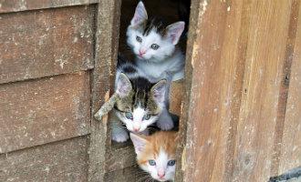 Bejaard echtpaar tot celstraf veroordeeld voor het vergiftigen van katten in Málaga