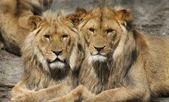 Dierentuin Barcelona wil over tien jaar alle exotische dieren weg hebben