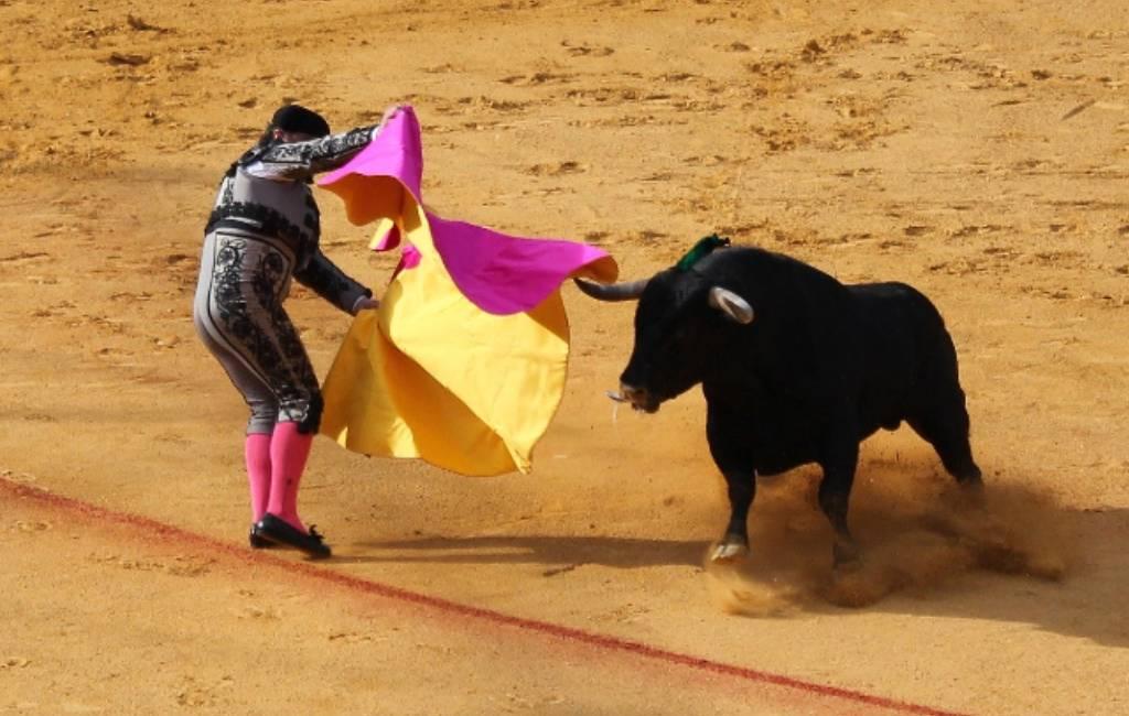 Nieuwe Spaanse cultuur en Sport minister houdt niet van stierenvechten en dierenleed