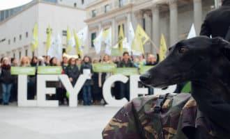 """Honderden dierenactivisten eisen de aanname van de """"ley cero"""" tegen dierenmishandeling in Spanje"""