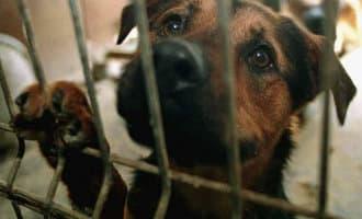 Familie die vier honden vanwege een vakantie 12 dagen alleen liet krijgt celstraf