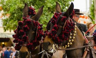 Uitgehongerd en uitgedroogd paard overlijdt tijdens de aprilfeesten in Sevilla