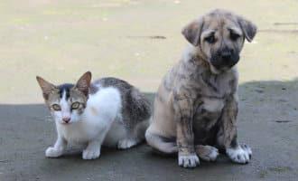 Boetes tot 30.000 euro voor het in de steek laten en mishandelen van huisdieren in Spanje