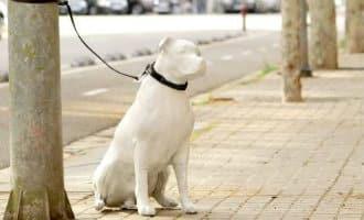 Barcelona wil de adoptie van huisdieren aanmoedigen met beelden van honden in de stad