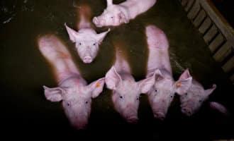 Honderden dieren zitten vast of zijn verdronken als gevolg van de overstromingen in Aragón