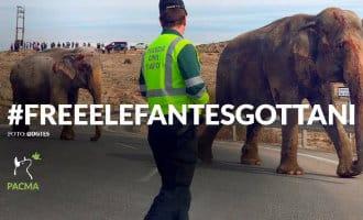 Spaanse Partij voor de Dieren eist vrijlating circus-olifanten die bij een ongeval betrokken waren