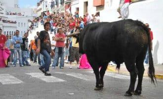 Een dode en een zwaargewonde bij stierenfeest in Arcos de la Frontera