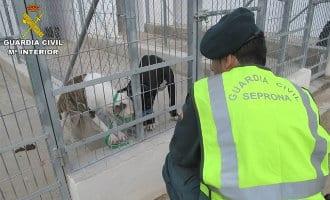 Nederlander krijgt twee jaar celstraf voor dodelijke aanval honden in Alicante