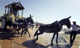 Negen paarden en een os overleden tijdens de bedevaart naar Rocío in Andalusië