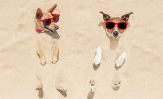 Torrevieja krijgt in juni twee voorlopige hondenstranden