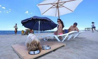 Hondenstrand Alicante zorgt voor meer hotelreserveringen met de hond