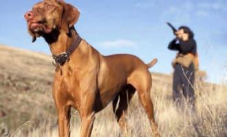 Jagers in Spanje willen dat hun honden niet gezien worden als huisdieren
