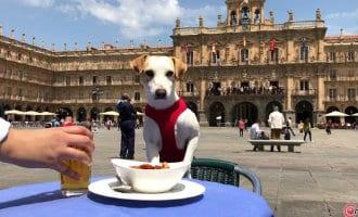 Pipper de influencer hond die het reizen met huisdieren in Castilla y León promoot