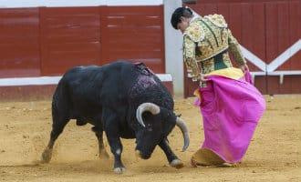 Cultuur minister Spanje houdt niet van stierenvechten