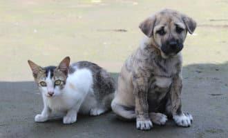 138.000 in de steek gelaten huisdieren in Spanje