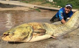 Meerval van bijna twee meter en 100 kilo gevangen in de Ebro rivier in Navarra
