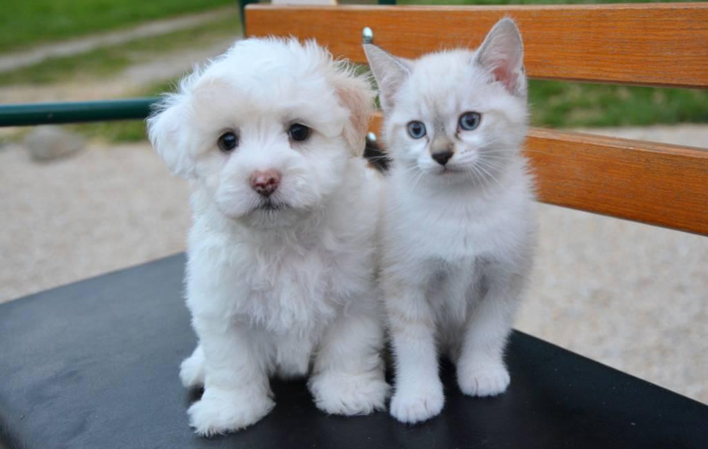 Er werden in 2017 in Spanje meer dan 138.000 honden en katten in de steek gelaten