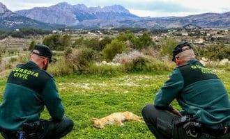 Politie Benissa onderzoekt zes jagers op mogelijke vergiftiging van honden