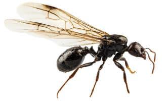 Restaurants La Carihuela in Torremolinos gesloten vanwege vliegende mieren
