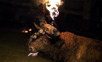Dierenmishandeling onder het mom van traditie in Spanje