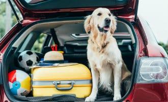 Met huisdieren naar Spanje reizen