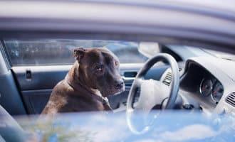 Vier honden in afgesloten auto in Gandía overleden