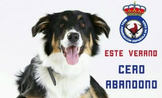 Federatie van jagers in Spanje start campagne tegen het in steek laten van honden
