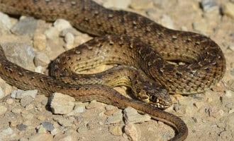 Giftige slang uit kinderwagen gehaald in Málaga