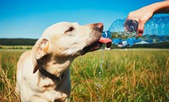 Honden en katten hebben ook last van de hittegolf in Spanje
