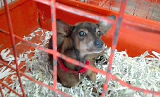 Brandweer redt hond bij brand in woning Córdoba (video)