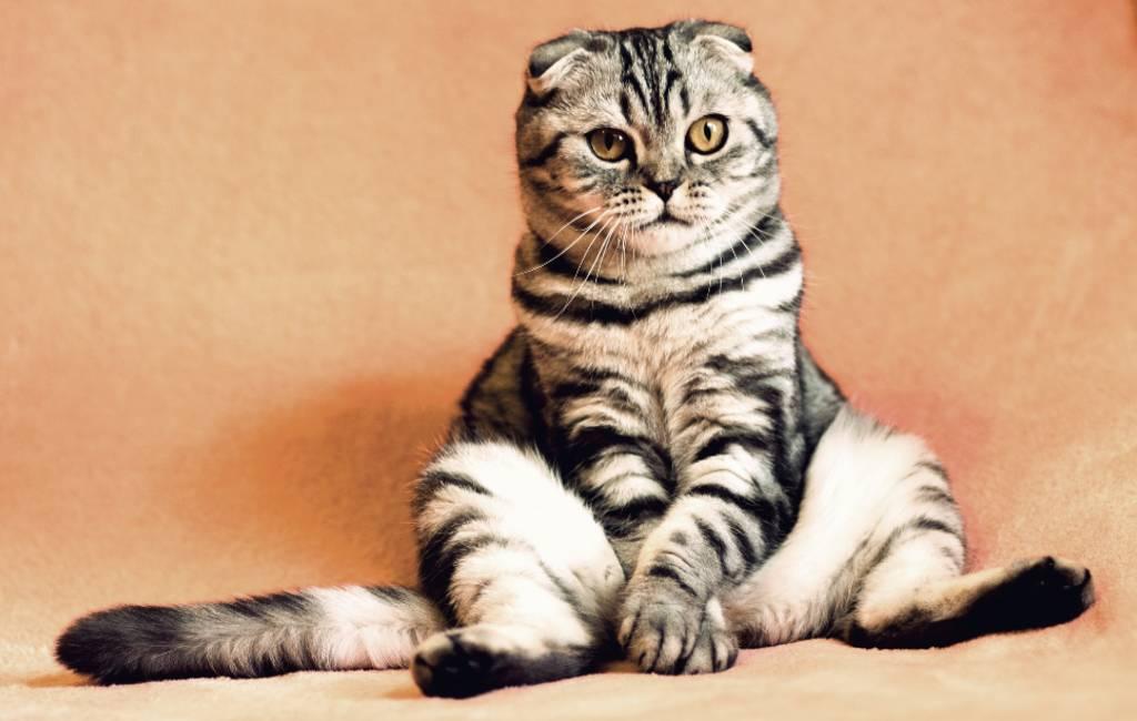 Vandaag is het (weer) internationale kattendag in Spanje