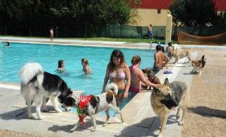 Met je hond in het zwembad in Spanje