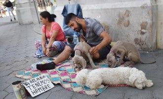 Steeds meer zwervers met honden te zien in Barcelona