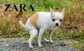 Stop de persen: Rijkste man van Spanje en Zara eigenaar raapt hondenpoep op