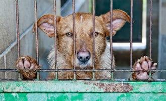 Verbod doden dieren in Madrid leidt tot volle asiels