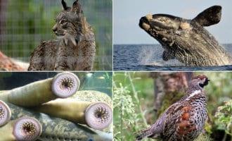 Lijst van 32 uitgestorven inheemse soorten flora en fauna in Spanje