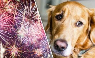 Gratis vuurwerkangst lessen voor honden