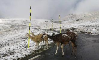 Eerste sneeuw van deze herfst gevallen in Spanje