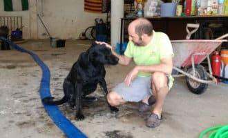 Duna, de hond die het noodweer op Mallorca overleefde door uren te zwemmen