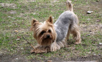 Drie maanden celstraf voor het doodhongeren van hond in Almería