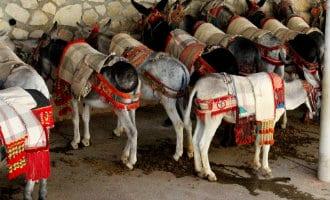 Mijas kondigt verbeteringen voor het welzijn van de ezel-taxi's aan