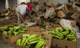 Nederlandse drugsbende opgerold in Málaga na vondst cocaïne in bananen
