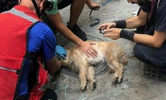 Brandweer redt en reanimeert hond na brand woning in Sevilla