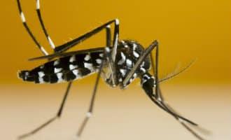 Twee en mogelijk drie besmettingsgevallen van het denguevirus bevestigd in Spanje